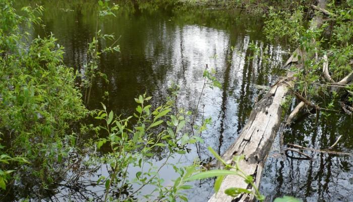 Деревянный мост по зеркалу воды