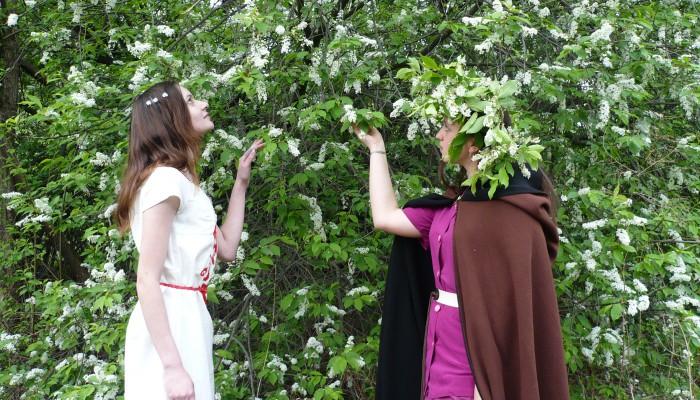 Девушки у цветущей черемухи